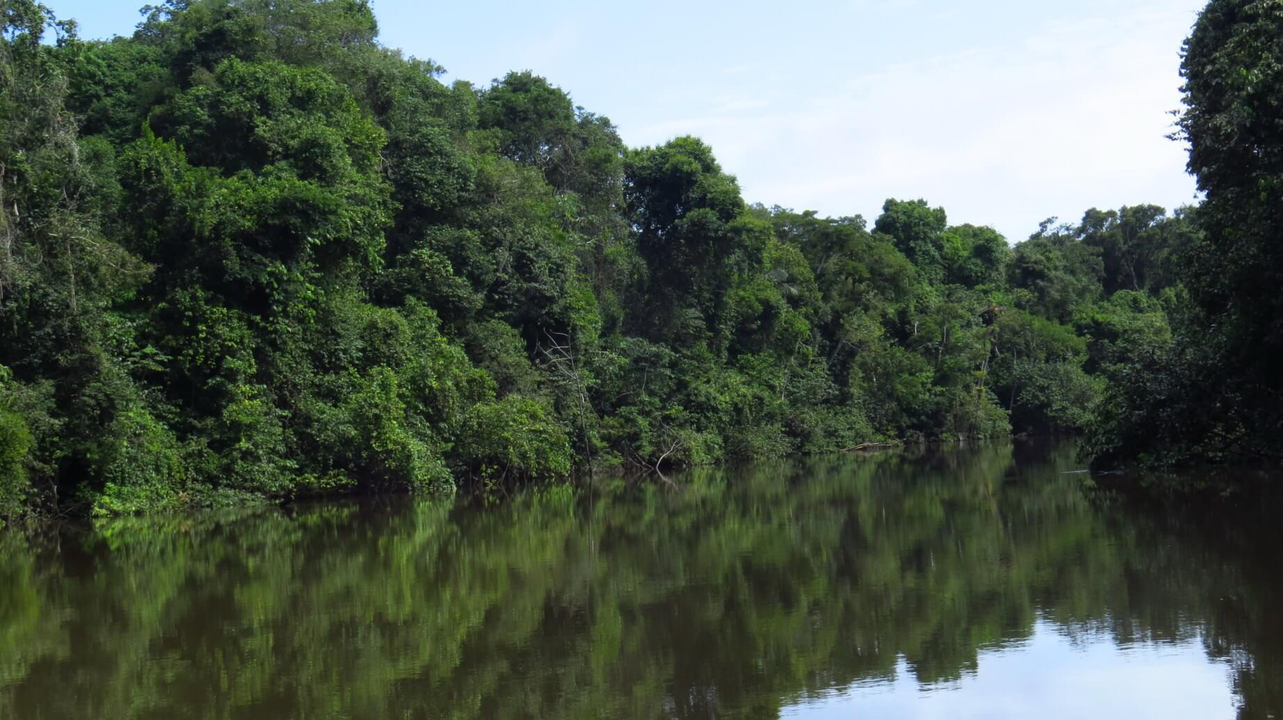 Amazonas1dn