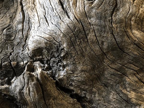 madera olivo dn