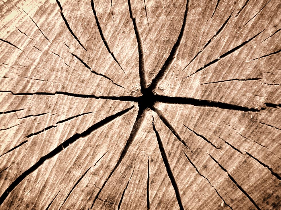 estrella madera Yolpiq - Empresa Diseño Natural