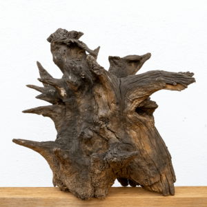 Escultura raíz de madera de castaño - Diseño Natural.