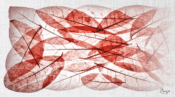 Hojas rojas sobre tela YOLPIQ
