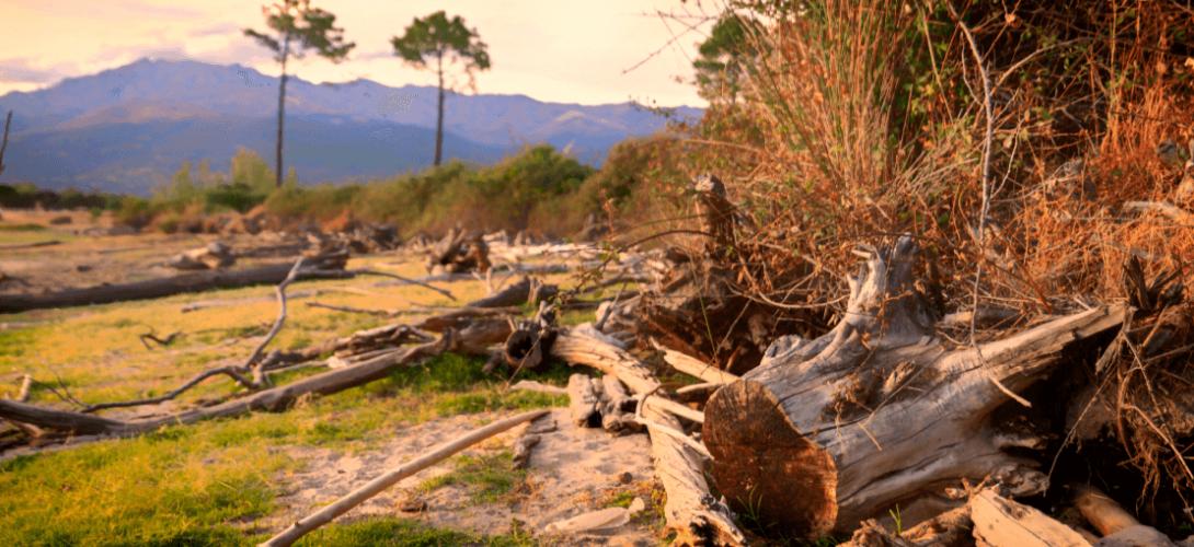 restos-madera-horiz-02-color